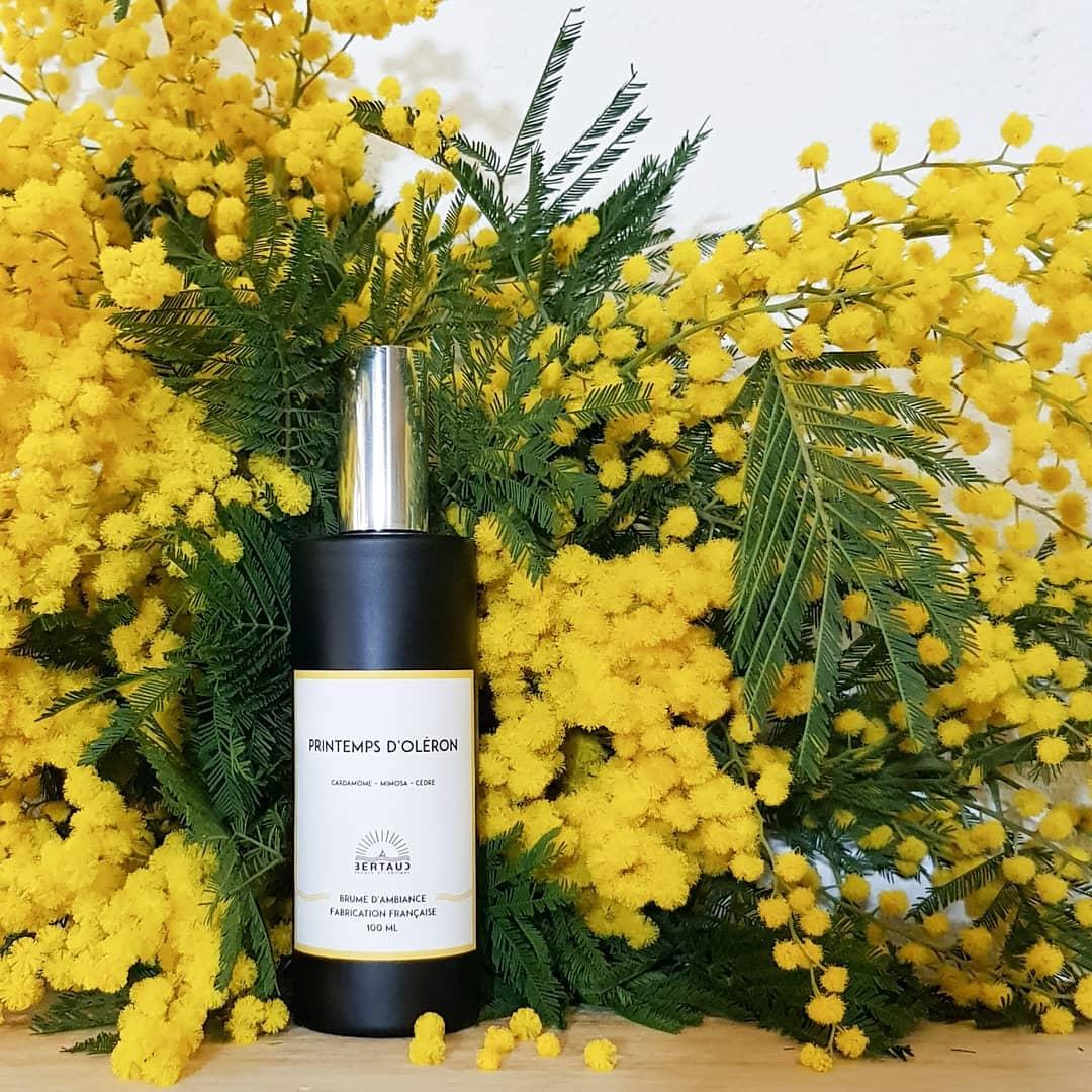 La magie du mimosa, c'est de faire entrer le soleil dans nos maisons. Nous avons créé le parfum Printemps d'Oléron pour prolonger l'effet de cette fleur éphémère, en attendant que le printemps frappe à la porte, pour de vrai 🌱 Disponible en bougie, brume d'ambiance et diffuseur à tiges rotin  . . 💐 by @chez_marguerite #parfumdinterieur #parfumdambiance #bougie #bougieparfumee #brumedinterieur #brumedambiance #diffuseur #mimosa #larochelle #charentemaritime #infinimentcharentes #aunisatlantique #aunismaraispoitevin #fabricationfrancaise #madeinfrance #frenchmade #candle #scentedcandle #roomspray #diffuser #reeddiffuser #homescents