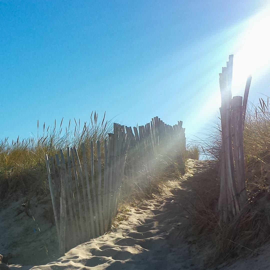 Marcher dans les dunes . . #coteatlantique #coteouest #atlantic #atlanticocean #seaside #seashore #oceanatlantique #borddemer #ocean #charentemaritime #infinimentcharentes #aunisatlantique #aunismaraispoitevin #larochelle #artisandefrance #artisancreateur #frenchmade #frenchmaker #frenchfineart #parfum #senteursatlantique